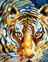 Tiger Gaze - Limited Edition Giclee